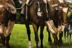 Pintura-de-Andaluzia-Espanha-com-cavalos-e-touro-por-Elton-Brunetti-image-07