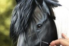 Pintura-de-um-Cavalo-Frisio-OST-60-x-90-cm-por-Elton-Brunetti-1