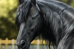 Pintura-de-um-Cavalo-Frisio-OST-60-x-90-cm-por-Elton-Brunetti-4