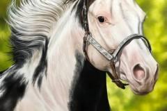 Pintura-de-um-cavalo-Paint-Horse-por-Elton-Brunetti