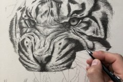 Curso-de-Desenho-de-Felinos-por-Elton-Brunetti-03