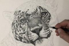 Curso-de-Desenho-de-Felinos-por-Elton-Brunetti-05