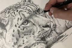 Curso-de-Desenho-de-Felinos-por-Elton-Brunetti-08