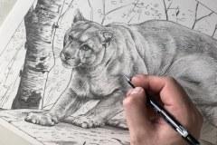 Curso-de-Desenho-de-Felinos-por-Elton-Brunetti-09