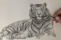Curso-de-Desenho-de-Felinos-por-Elton-Brunetti-13