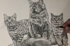 Curso-de-Desenho-de-Felinos-por-Elton-Brunetti-15