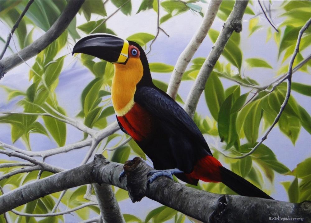 pintura-tucano-artista-elton-brunetti