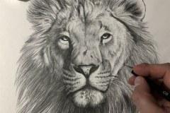 tela-1-esboco-de-um-leao-curso-de-desenho-e-pintura-de-felinos-Elton-Brunetti