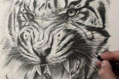 1-desenho-tigre-Elton-Brunetti