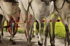 Pintura-de-carruagem-com-cavalos-por-Elton-Brunetti-7