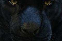 pantera-negra-por-Elton-Brunetti