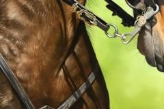 pintura-de-cavalo-por-elton-btunetti-8