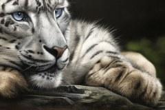 Pintura-tela-Leopardo-das-Neves-por-Elton-Brunetti-05