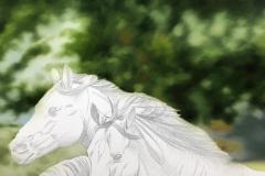 Pintura-de-cavalos-arabes-por-Elton-Brunetti-02
