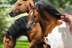 Pintura-de-cavalos-arabes-por-Elton-Brunetti-07