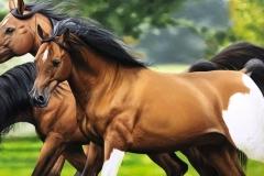 Pintura-de-cavalos-arabes-por-Elton-Brunetti-10