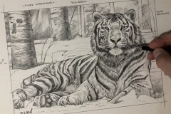 Desenho-Tigre-SIberiano-por-Elton-Brunetti