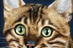 quadro-gatos-60x80-cm-Elton-Brunetti-Detalhes-1