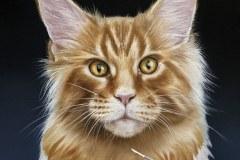 quadro-gatos-60x80-cm-Elton-Brunetti-Detalhes-3