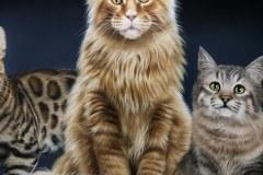 quadro-gatos-60x80-cm-Elton-Brunetti-Detalhes-5