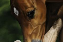 pintura-de-um-cavalo-com-cachorro-por-Elton-Brunetti-10