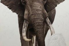pintura-de-leao-com-elefante-por-Elton-Brunetti-02