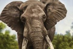 pintura-de-leao-com-elefante-por-Elton-Brunetti-04